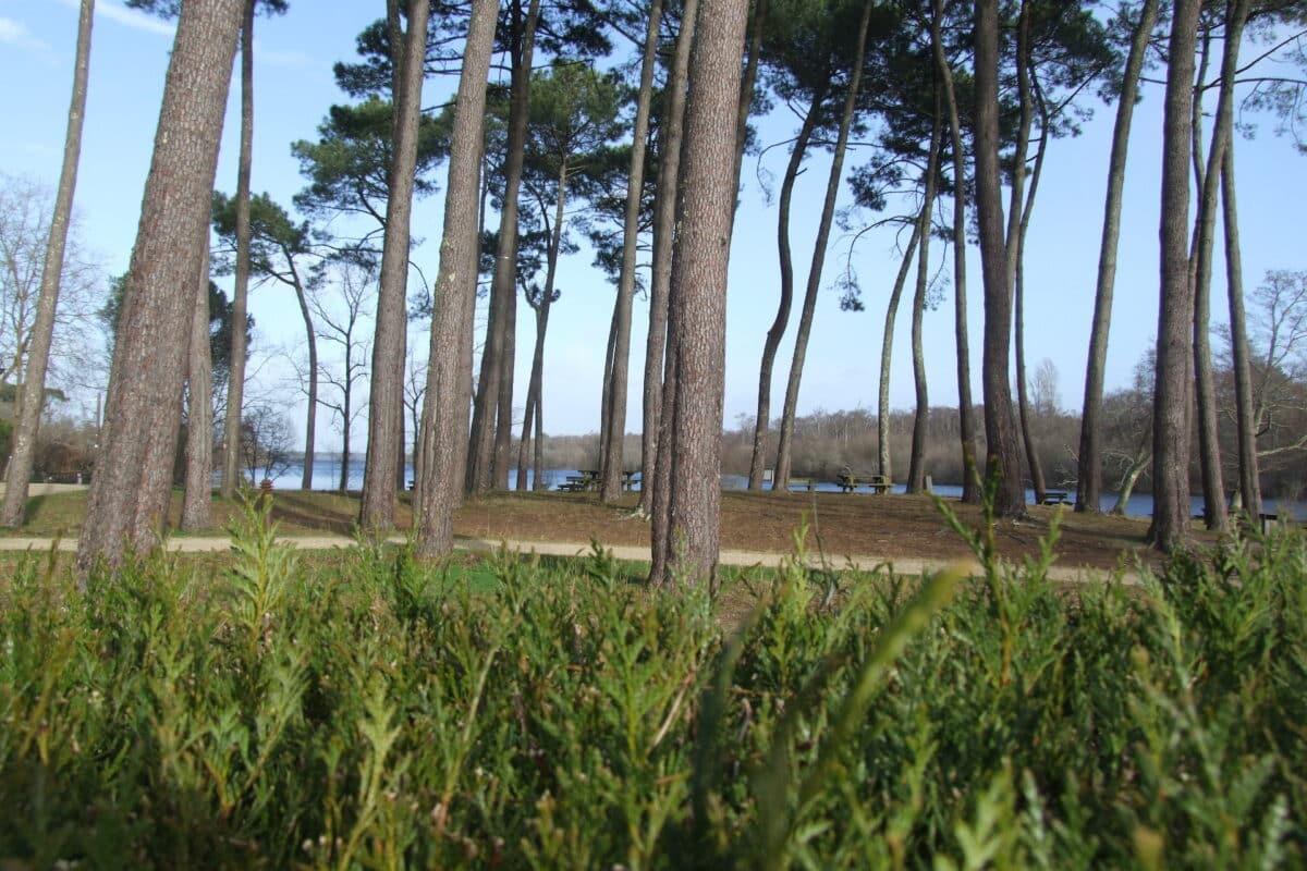 Jardin Au Bon Coin du Lac Mimizan 3